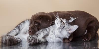 Waipio Pet Clinic Offers Free Puppy & Kitten Exam!, Ewa, Hawaii