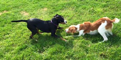 5 Tips for Socializing a Young Dog Safely, Walworth, New York