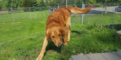 Dog Kennel Shares Hot Weather Safety Tips for Your Pet, Walworth, New York