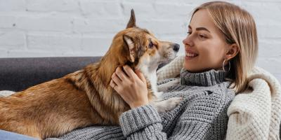 3 Ways Pets Affect the HVAC System, Wisconsin Rapids, Wisconsin