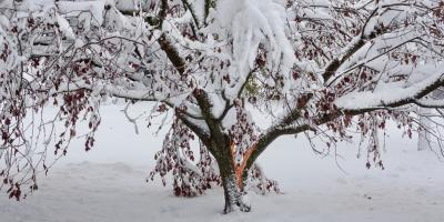 3 Kinds of Tree Damage Caused by Blizzards, Macedon, New York