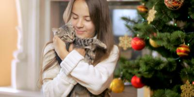How to Cat-Proof Your Christmas Tree, Waynesboro, Virginia