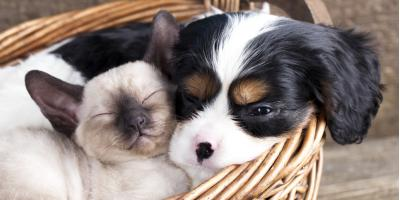 4 Causes of Bad Breath So You Can Implement Proper Pet Care, Waynesboro, Virginia