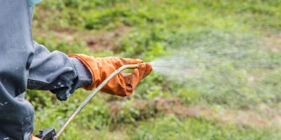 Why Fall Is the Perfect Time to Break Out the Weed Killer, Cincinnati, Ohio