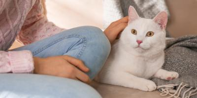 Cat Vomiting: When to Take Your Cat to the Vet, Mineral Springs, North Carolina