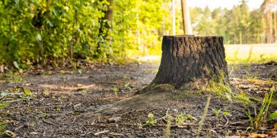 The Difference Between Stump Grinding & Stump Removal, West Hartford, Connecticut