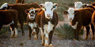 3 Benefits of a Concrete Cattle Guard, West Plains, Missouri