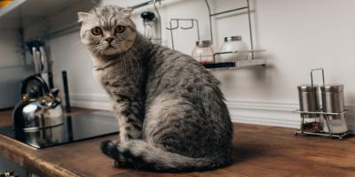 5 Ways to Keep Pets Safe During Your Kitchen Remodeling Project, Greenburgh, New York