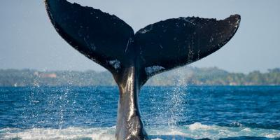 3 Essentials Items to Bring on a Whale Watching Tour, Waianae, Hawaii