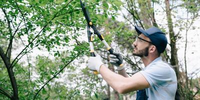 3 Tips To Reduce Wildlife Problems in Spring, Miami, Ohio