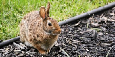 Wildlife Control Experts Offer 4 Tips to Keep Pests Out of the Garden, New Milford, Connecticut
