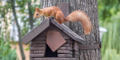 3 Steps to Take if You Find a Critter in Your Home, Miami, Ohio