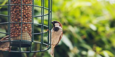 3 Reasons to Reconsider Your Bird Feeder, Miami, Ohio