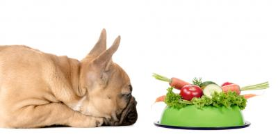 3 Pet Care Tips to Help Your Dog or Cat Maintain a Healthy Weight, Wisconsin Dells, Wisconsin