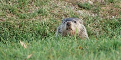 3 Ways Woodchucks Are Damaging Your Home, New Milford, Connecticut