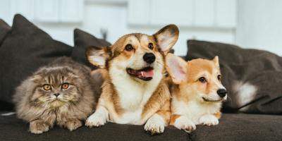Top 3 Benefits of Spaying or Neutering Your Pet, Versailles, Kentucky