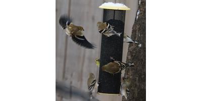 A Guide on Winter Bird Feeding, Lincoln, Nebraska