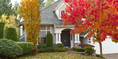 3 Fall Tree Care Tips, York, South Carolina