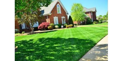 Free Lawn Treatment, Cincinnati, Ohio