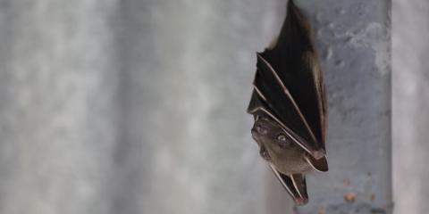 What Do Bats Eat?, New Milford, Connecticut