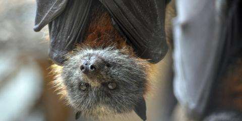 What Do Bats Do All Day & Night?, New Milford, Connecticut
