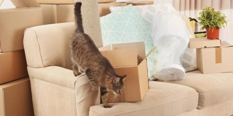 Lincoln's Leading Moving Company Shares 3 Tips for Moving With Pets, Lincoln, Nebraska