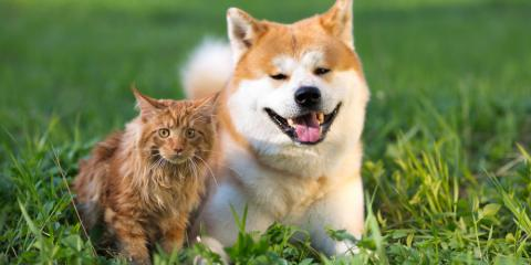 Own a Pet? Here's Why They Need Animal Vaccines, Enterprise, Alabama