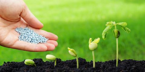 5 Steps Involved in 1st Place Turf's Organic Lawn Care Program, Harrisburg, North Carolina