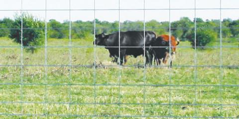 "50"" x 16' - 10 Line Cattle Panel - Only $19.99, Clifton, Texas"