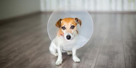 4 Common Inflammatory Conditions in Dogs, Florence, Kentucky