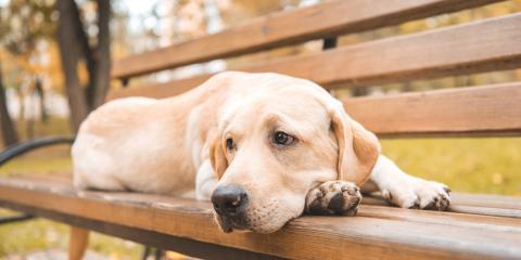 Understanding Grief in Dogs, Lincoln, Nebraska