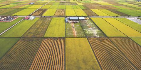 4 FAQ About Crop Insurance, David City, Nebraska
