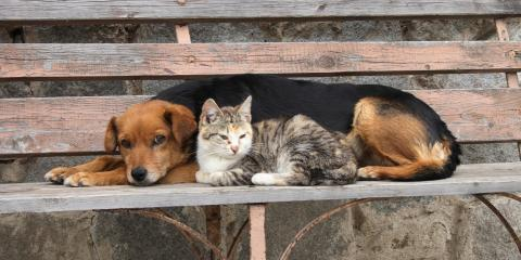How to Help Your Cat & Dog Get Along, Foley, Alabama