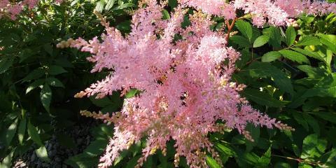 5 Perennials for Your Shade Garden, Nicholasville, Kentucky