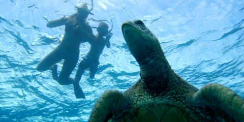 Why You Should Swim With Turtles at Ko Olina Ocean Adventures, Ewa, Hawaii