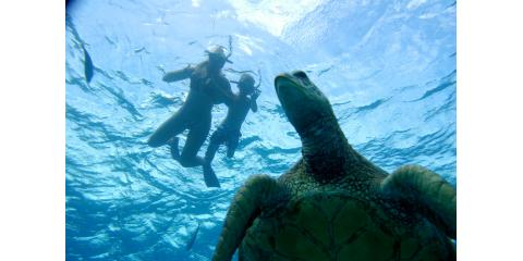 What to Know If You Want to Swim With Turtles, Ewa, Hawaii