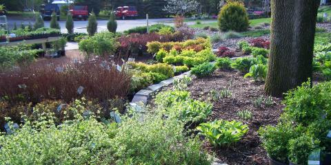 How to Choose the Perfect Plant for Your Yard, Holland, Wisconsin