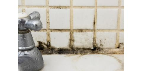 10 Things Smart Homeowners need to Know about Mold, Columbia, Missouri