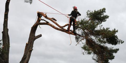Why You Should Hire West Hartford's Top Certified Arborists This Spring, West Hartford, Connecticut
