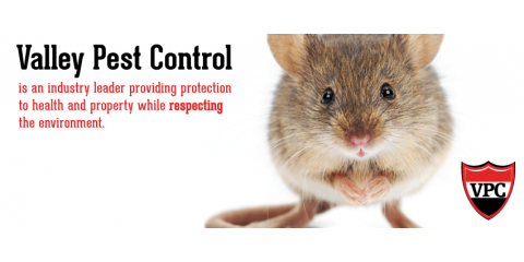Valley Pest Control, Pest Control, Services, Oshkosh, Wisconsin