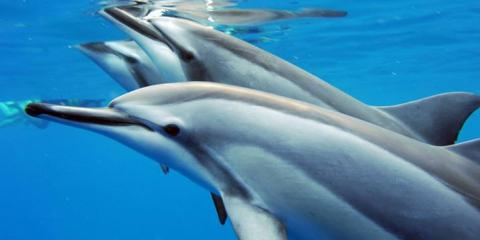 How to Swim With Dolphins in Hawaii, Ewa, Hawaii