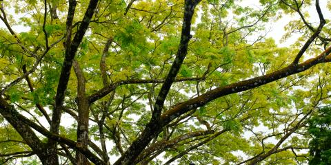 Protect Your Home This Winter With Tree Limb Removal Services, Loveland, Ohio