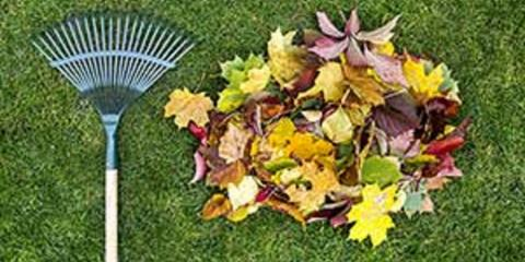 Rake Leaves Like a Pro, New Braunfels, Texas