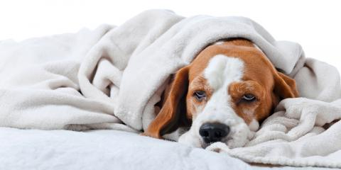 Should My Dog Get a Flu Shot?, Covington, Kentucky