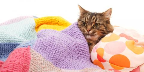 3 Signs Your Cat Is Unwell, Rosenberg-Richmond, Texas