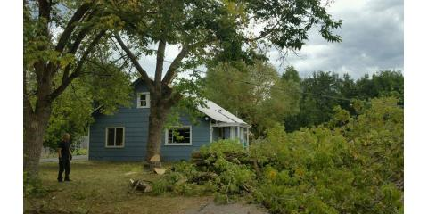 3 Signs You Need Tree Removal Services for Your Lakeside Property, Lakeside, Montana