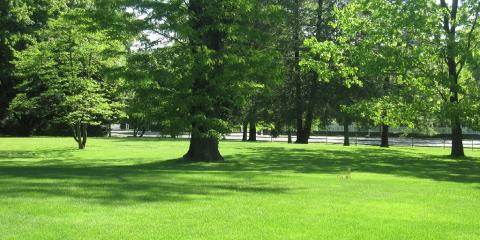 Why You Should Leave Your Harrison Lawn Maintenance to the Professionals, Harrison, New York
