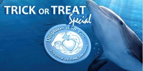 Swim With Dolphins Tour Hawaii - $31 Off Special, Honolulu, Hawaii