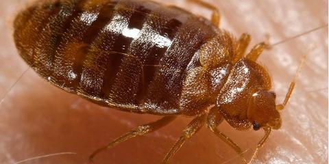 Summer Home Invaders Beware: Residential Pest Control Is On The Loose, Lexington-Fayette, Kentucky