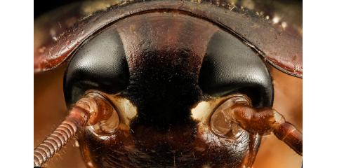 Roaches are getting bad after I turned on my heat!!, Mobile, Alabama